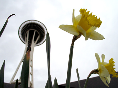 Space Needle and flower